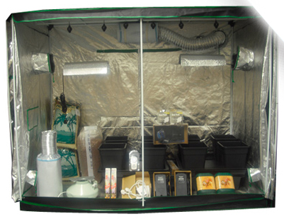 2.4m x 1.2m Wilma Big 8 Grow Tent Kit