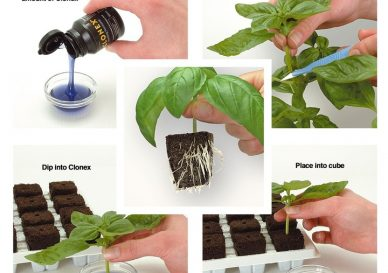 root-riot-propagation-kit-p261-735-image-2-large